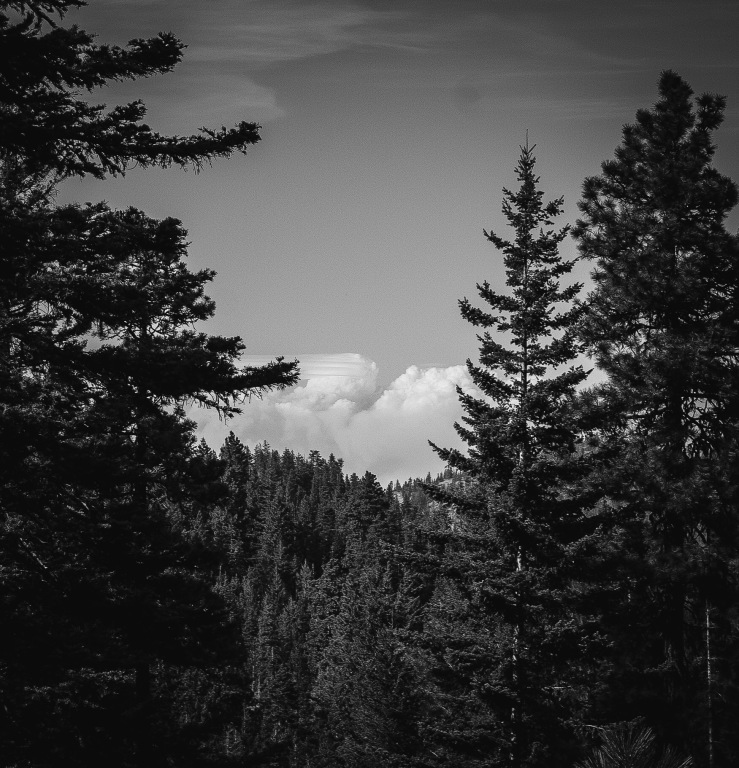 I decided to hike the Discovery Trail in the Okanogan-Wenatchee National Forest, which serves as a guided tour of the effects of wildfires on old growth forests. Timely considering a large portion north of where I was hiking was currently on fire. I could see massive clouds of smoke billowing into the sky through the trees.