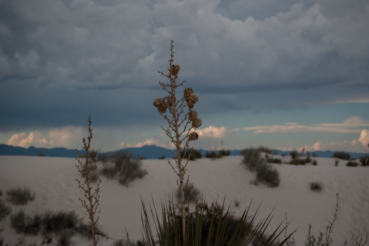 White Sands National Monument 9 (1 of 1)