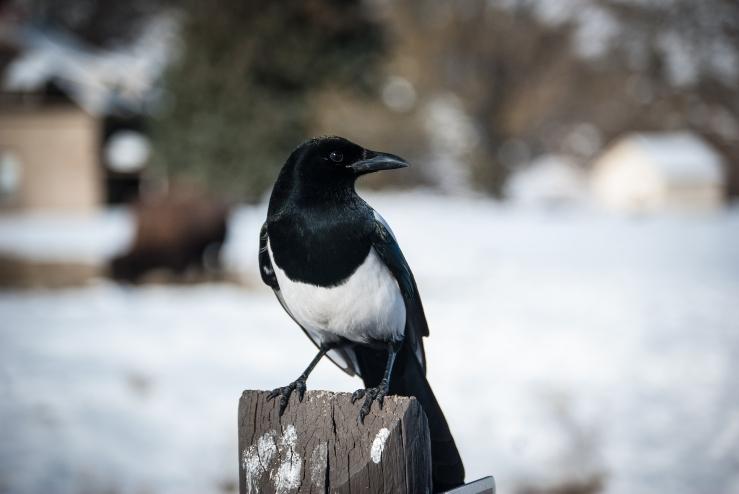 Werk, bird! WERK!