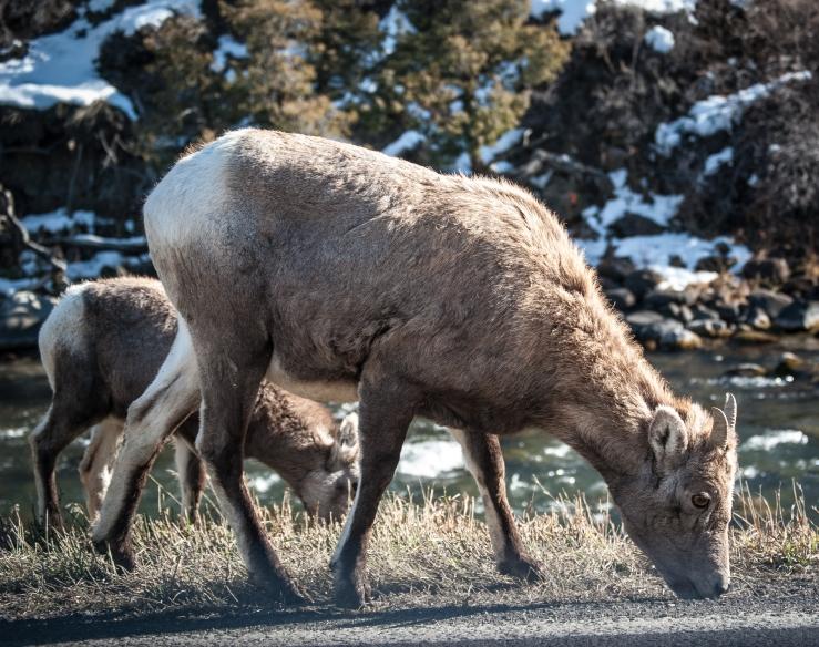Yellowstone 2 (1 of 1)
